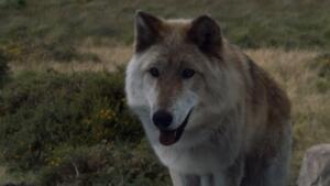 Game of Thrones: morto il cane Odin, interprete di Summer